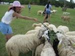 sheap